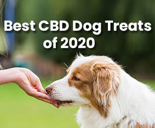 Best CBD Dog Treats to Buy in 2021