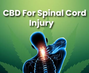 How CBD Helps in Spinal Cord Injury?