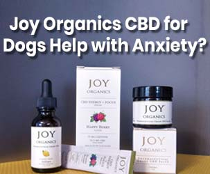 Does Joy Organics CBD for Dogs Really Help with Anxiety?