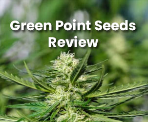 GreenPoint Seeds Review | Best Place to Buy Female Cannabis Seeds
