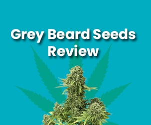 Grey Beard Seeds Review | The Best Seller of Hemp Seeds