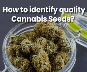 How to identify quality Cannabis Seeds?