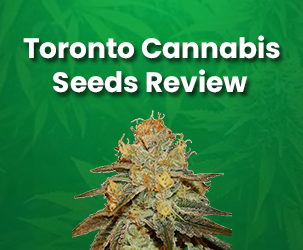 Toronto Cannabis Seeds Review | Top Quality CBD Seed Products