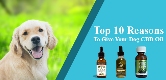 Best CBD Oil For Pets