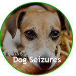 Treat Seizures and Epilepsy